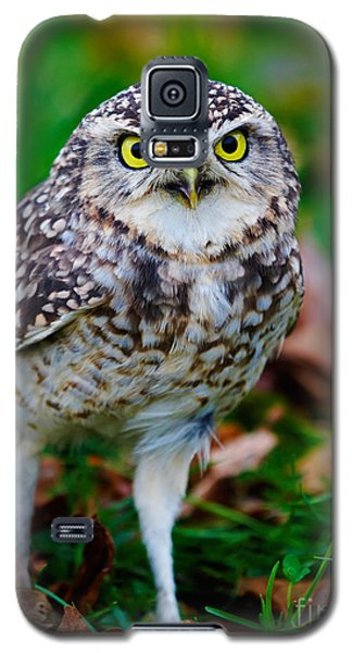 Galaxy S5 Case featuring the photograph Burrowing Owl  by Nick  Biemans