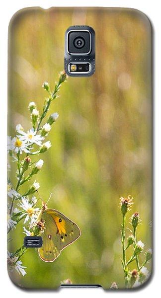 Butterfly In A Field Of Flowers Galaxy S5 Case