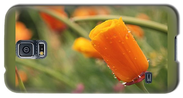 California Poppies Galaxy S5 Case by Rona Black