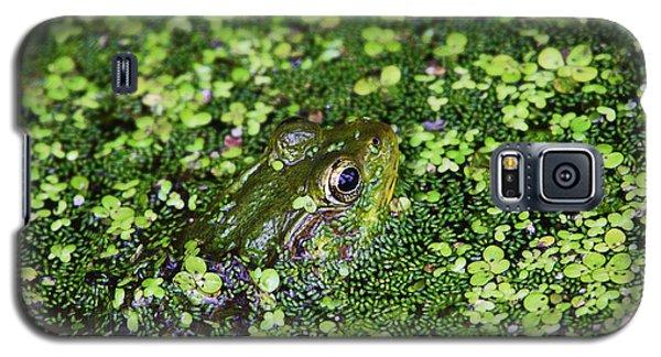 Camo Frog Galaxy S5 Case