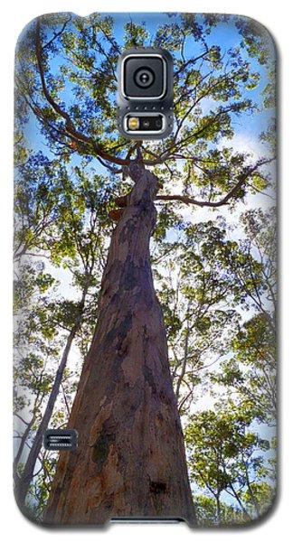 Canopy Galaxy S5 Case by Cassandra Buckley
