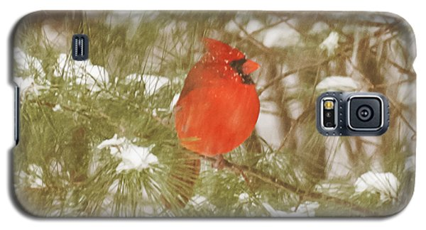 Cardinal In Snow Storm Galaxy S5 Case