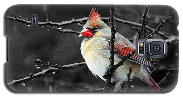 Galaxy S5 Case featuring the photograph Cardinal On A Rainy Day by Trina  Ansel