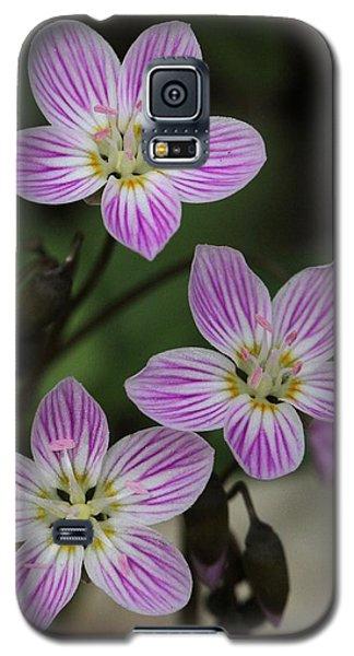 Carolina Spring Beauty Galaxy S5 Case by Doris Potter