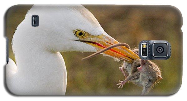 Cattle Egret Galaxy S5 Case by Doug Herr