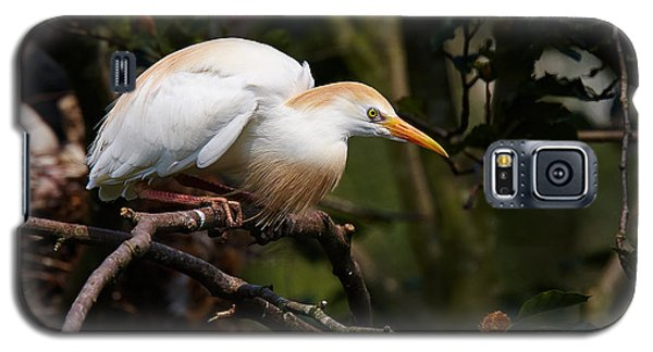 Galaxy S5 Case featuring the photograph Cattle Egret In A Tree by Nick  Biemans