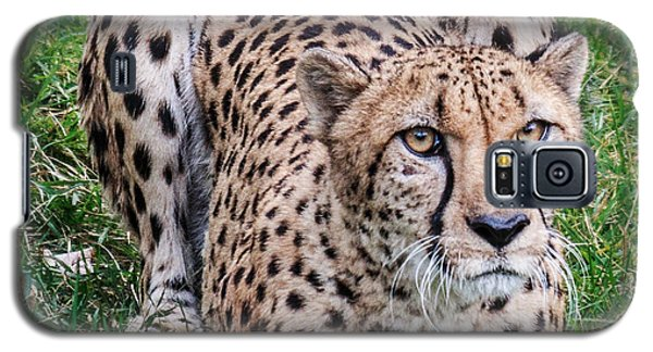 Galaxy S5 Case featuring the photograph Cheetah by Cathy Donohoue
