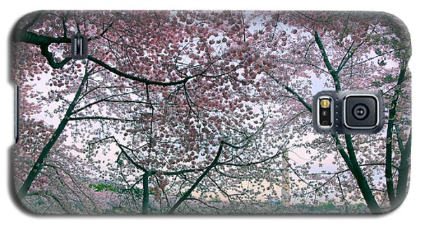 Cherry Blossom Trees Galaxy S5 Case by Mitch Cat