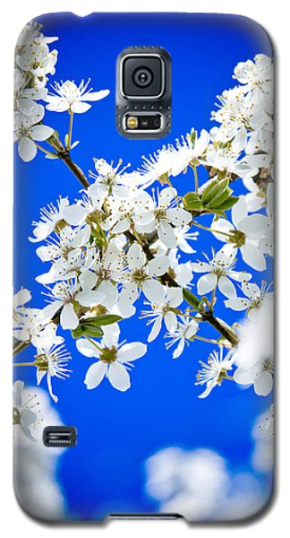 Cherry Blossom With Blue Sky Galaxy S5 Case