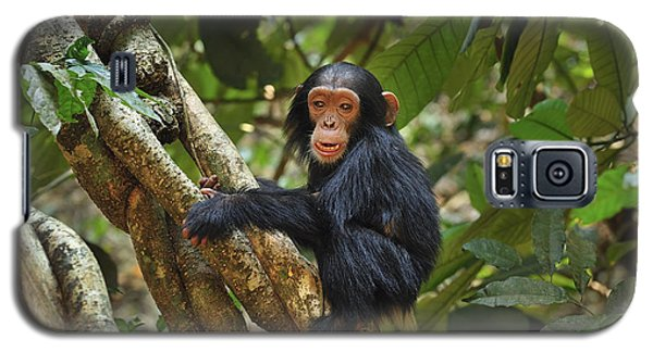 Chimpanzee Baby On Liana Gombe Stream Galaxy S5 Case by Thomas Marent