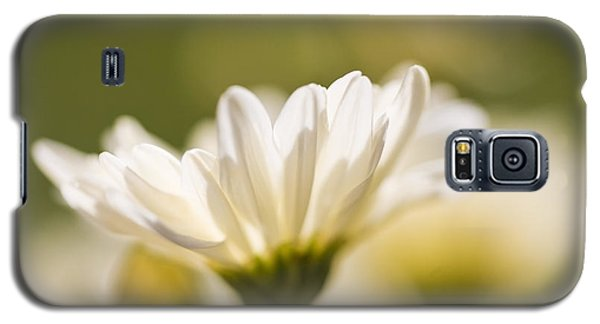 Chrysanthemum Flowers Galaxy S5 Case