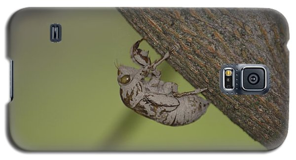 Galaxy S5 Case featuring the photograph Cicada by Randy Bodkins
