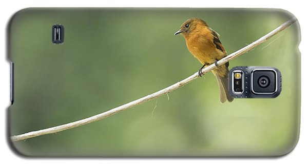 Cinnamon Flycatcher Galaxy S5 Case