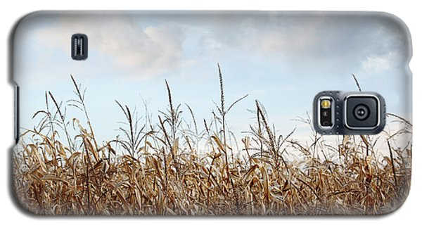 Closeup Of Corn Stalks  Galaxy S5 Case