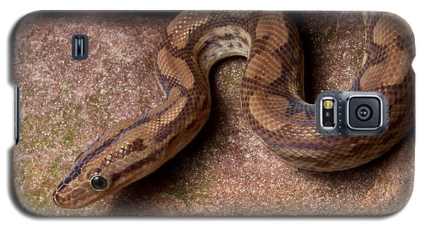 Galaxy S5 Case featuring the photograph Colombian Rainbow Boa Epicrates Maurus by David Kenny