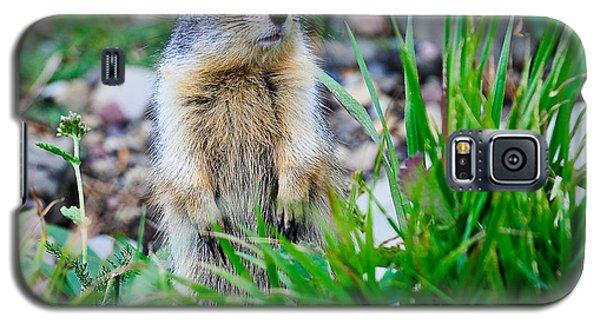 Columbian Ground Squirrel Galaxy S5 Case