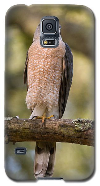 Galaxy S5 Case featuring the photograph Cooper's Hawk by Doug Herr