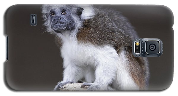 Galaxy S5 Case featuring the photograph Cotton Top Tamarin by Shoal Hollingsworth