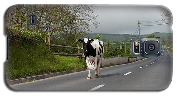 Cow Walks Along Country Road Galaxy S5 Case