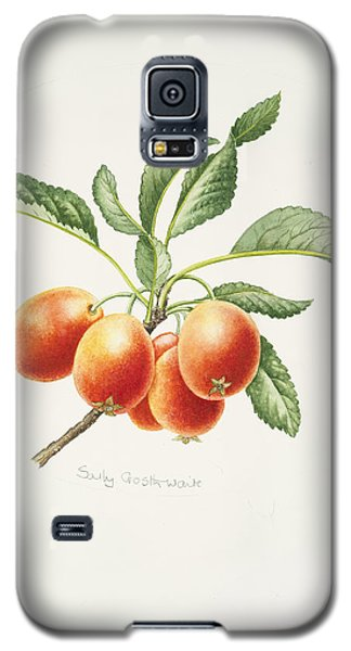 Crab Apples Galaxy S5 Case by Sally Crosthwaite