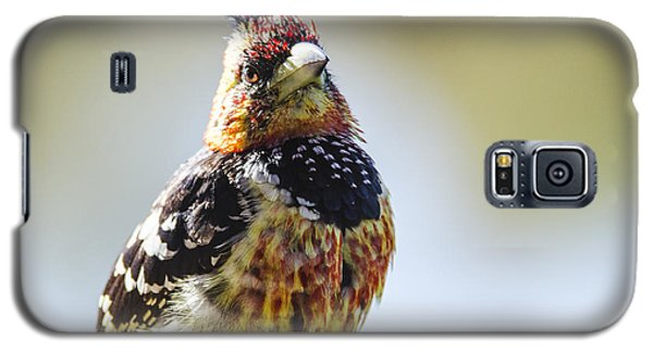 Crested Barbet Galaxy S5 Case by Pravine Chester