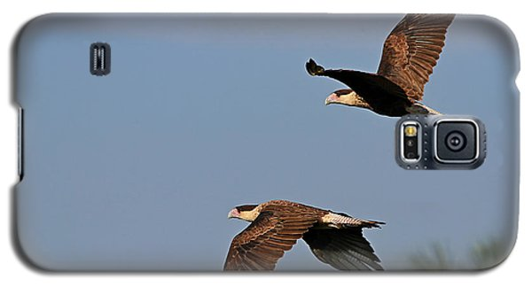 Crested Caracara Pair Galaxy S5 Case