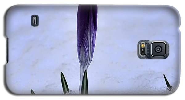 Crocus In Snow Galaxy S5 Case