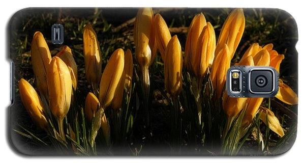 Galaxy S5 Case featuring the photograph Crocus by Inge Riis McDonald