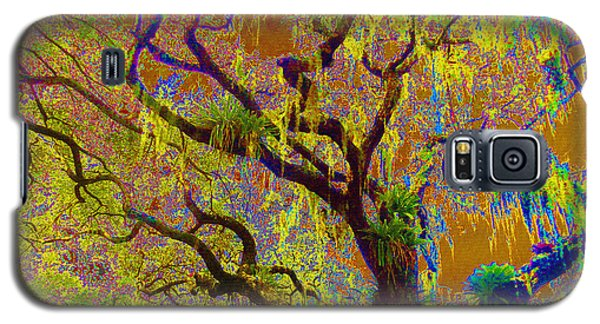 Galaxy S5 Case featuring the photograph Cypress by Ann Johndro-Collins