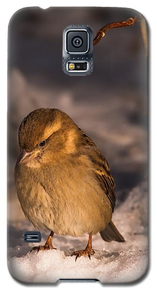 Galaxy S5 Case featuring the photograph Deep In Thought by Rose-Maries Pictures