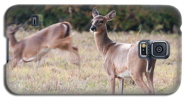 Deer At Paynes Prairie Galaxy S5 Case