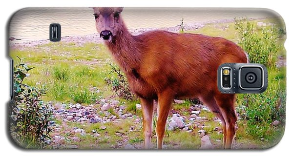 Deer Visit Galaxy S5 Case by Cathy Long