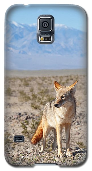 Desert Coyote  Galaxy S5 Case