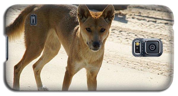 Dingo Galaxy S5 Case by Carol Ailles