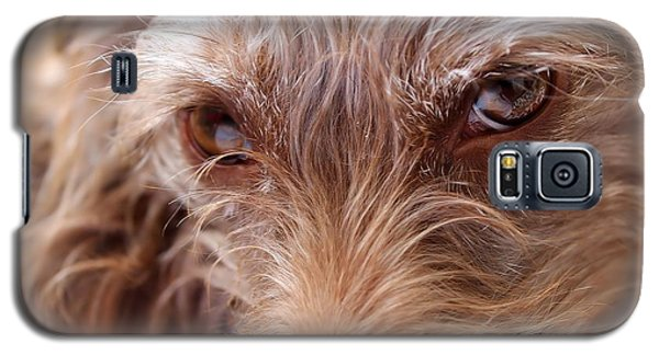 Dog Stare Galaxy S5 Case