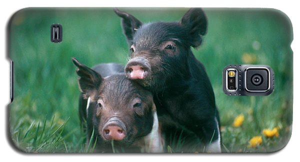 Domestic Piglets Galaxy S5 Case by Alan Carey