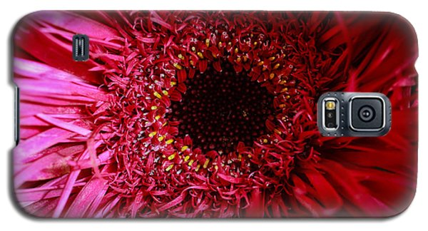 Galaxy S5 Case featuring the photograph Dressy by Julie Andel