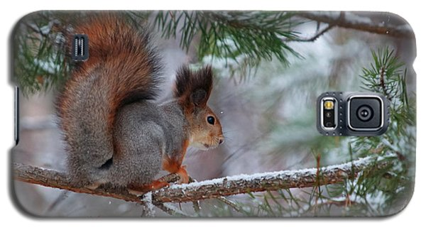 Eurasian Red Squirrel Galaxy S5 Case