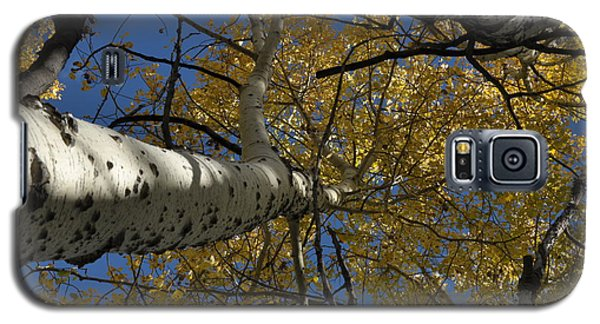Fall Aspen Galaxy S5 Case