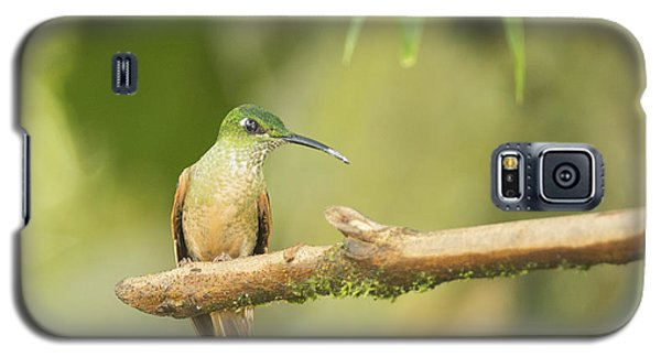 Galaxy S5 Case featuring the photograph Fawn-breasted Brilliant Hummingbird by Dan Suzio