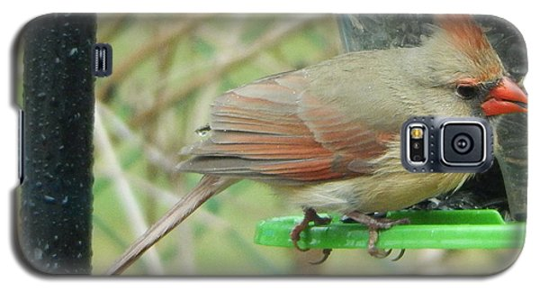 Galaxy S5 Case featuring the photograph Female Cardinal by Betty-Anne McDonald