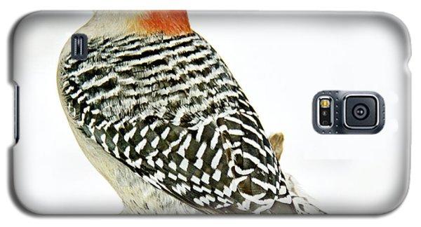 Female Redbellied Woodpecker In Winter Animal Portrait Galaxy S5 Case