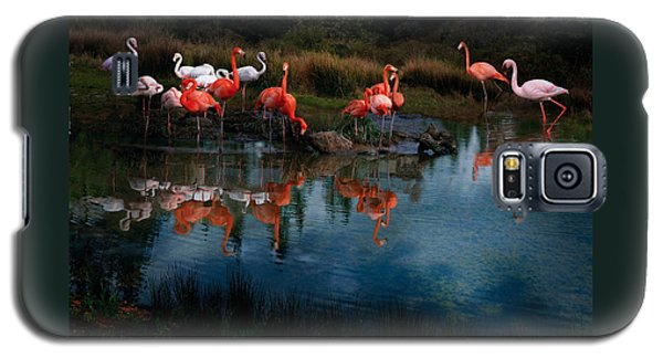 Flamingo Convention Galaxy S5 Case