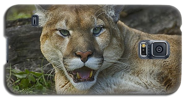 Florida Panther Galaxy S5 Case by Anne Rodkin