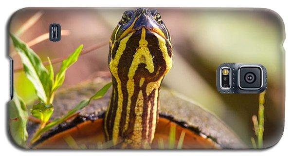 Florida Redbelly Turtle Galaxy S5 Case