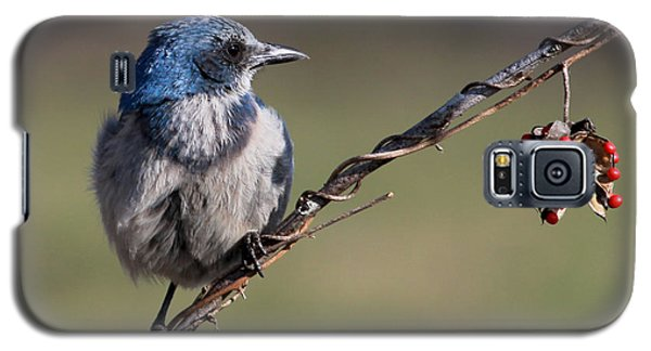 Florida Scrub Jay Galaxy S5 Case