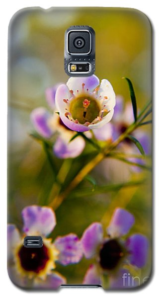 Galaxy S5 Case featuring the photograph Flower by Serene Maisey
