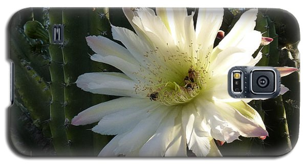 Galaxy S5 Case featuring the photograph Flowering Cactus 1 by Mariusz Kula