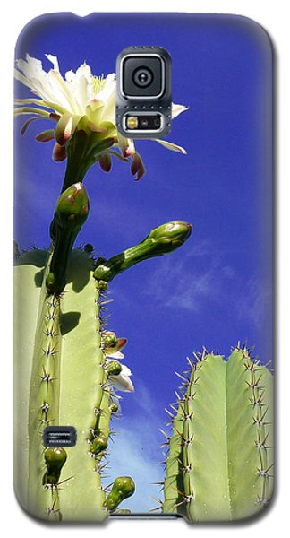 Galaxy S5 Case featuring the photograph Flowering Cactus 2 by Mariusz Kula