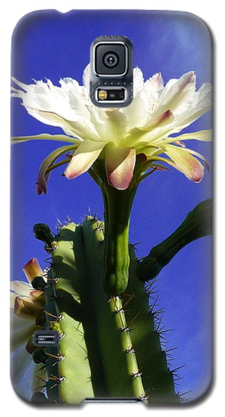 Galaxy S5 Case featuring the photograph Flowering Cactus 3 by Mariusz Kula
